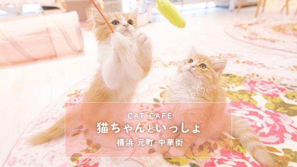 猫カフェの子猫に癒やされてきました