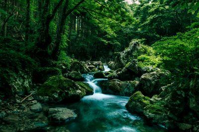 深い森の中を流れる白賀渓谷の写真