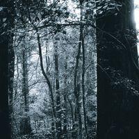 モノクロの森の写真