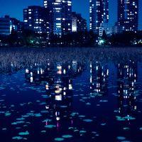夜の不忍池に写り込んだ高層ビルの明かりの写真