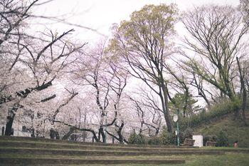 板橋区立加賀公園(春)の写真