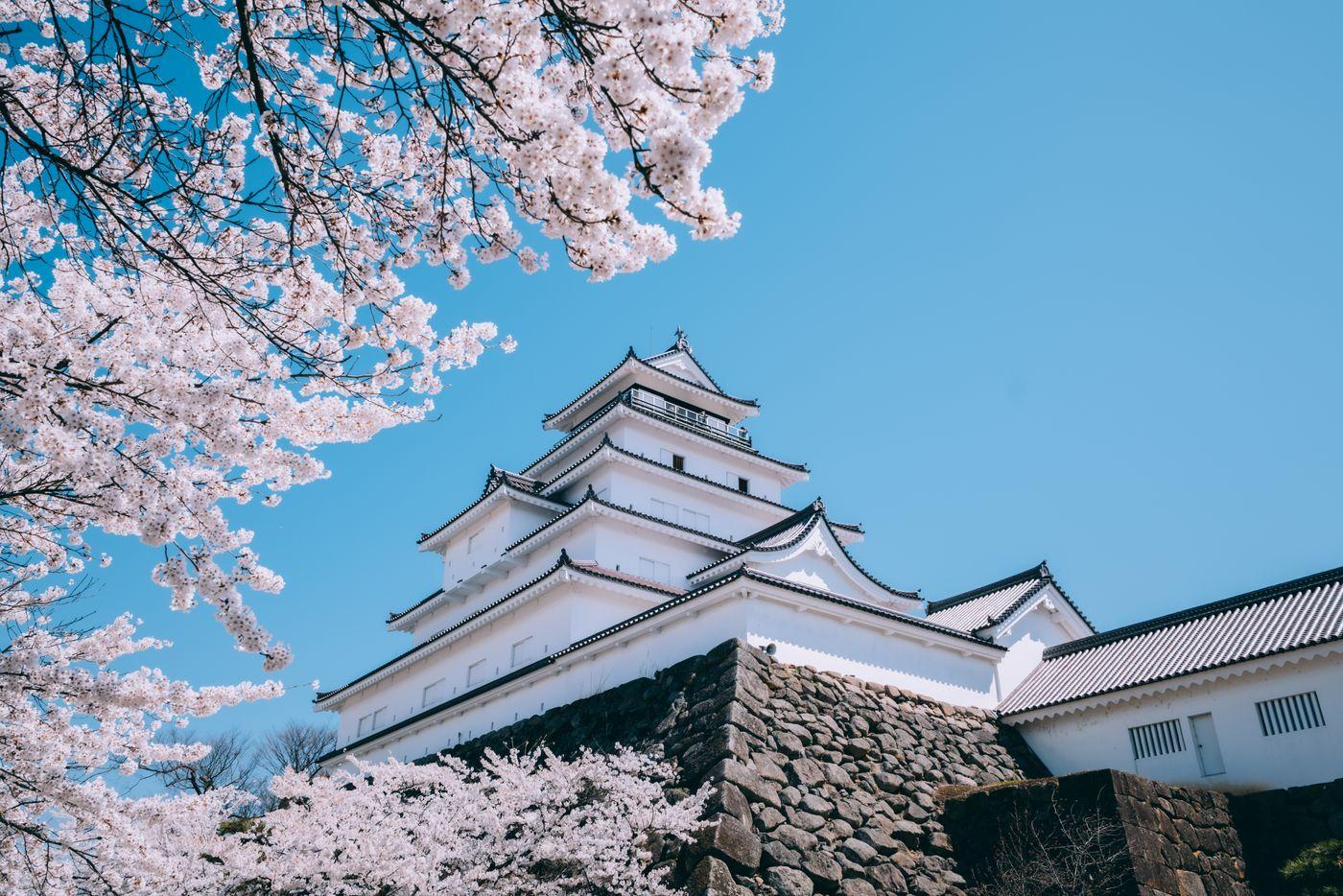 鶴ヶ城と桜の構図の写真