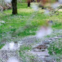 桜の散る後の写真