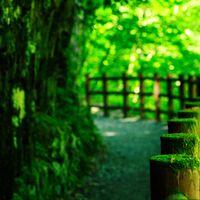 苔の森ロードの写真