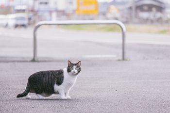 白昼に飼い主の浮気現場を目撃して驚愕を隠せない猫の写真