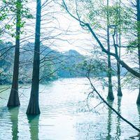 森林浴に最適な篠栗九大の森の写真