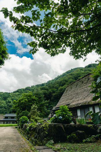 木陰から見上げる菅沼集落の合掌造りの写真