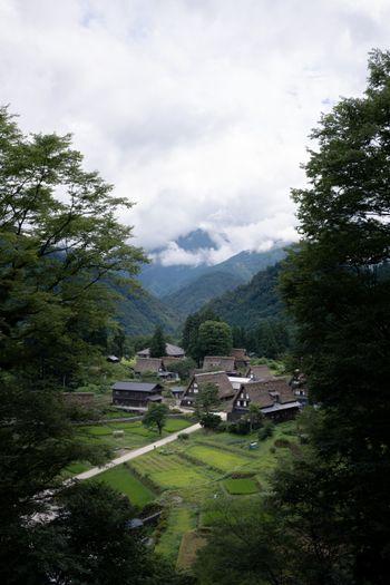 木々の間から望む山間の相倉集落の写真