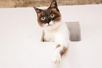 水槽のさかなを高位置から狙う猫の写真
