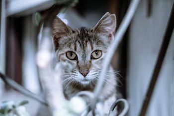 こちらを凝視する猫ちゃんの写真