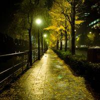夜の日比谷と銀杏の写真