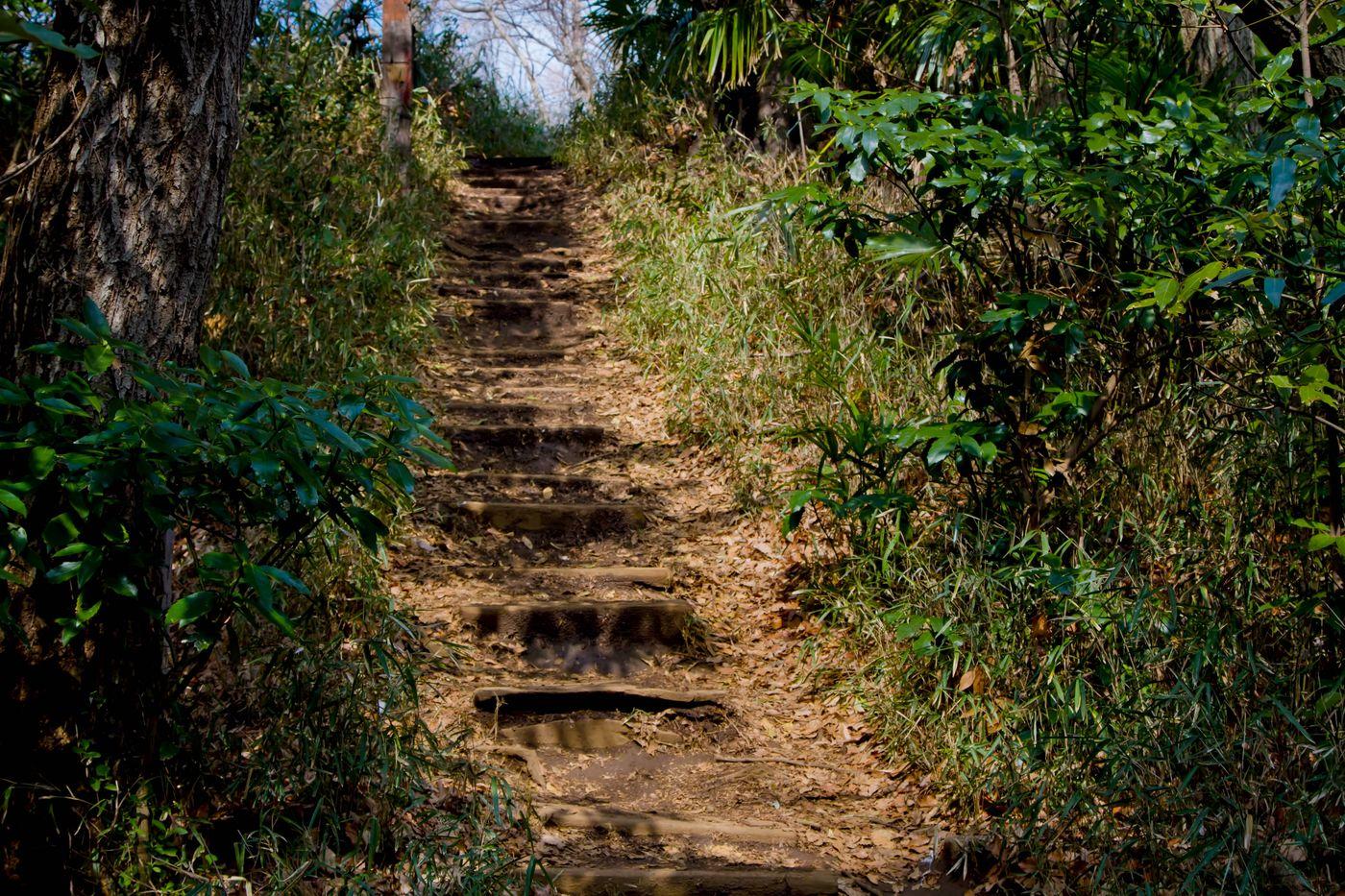 不気味な山道の階段の写真