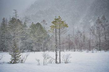 雪原になる冬の田代湿原の写真