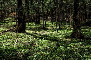 上高地にある森の風景の写真