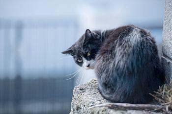 後ろを気にする猫の写真
