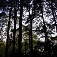 雑木林のシルエットの写真
