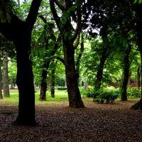 代々木公園の薄暗い木々の写真