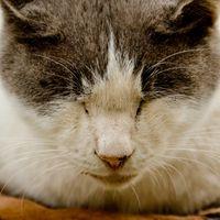 猫の寝顔の写真