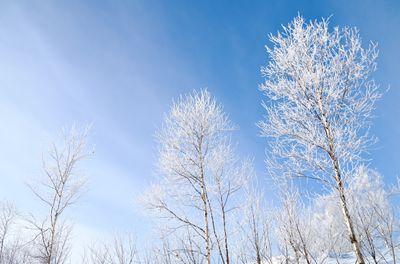 青空と霧氷の写真