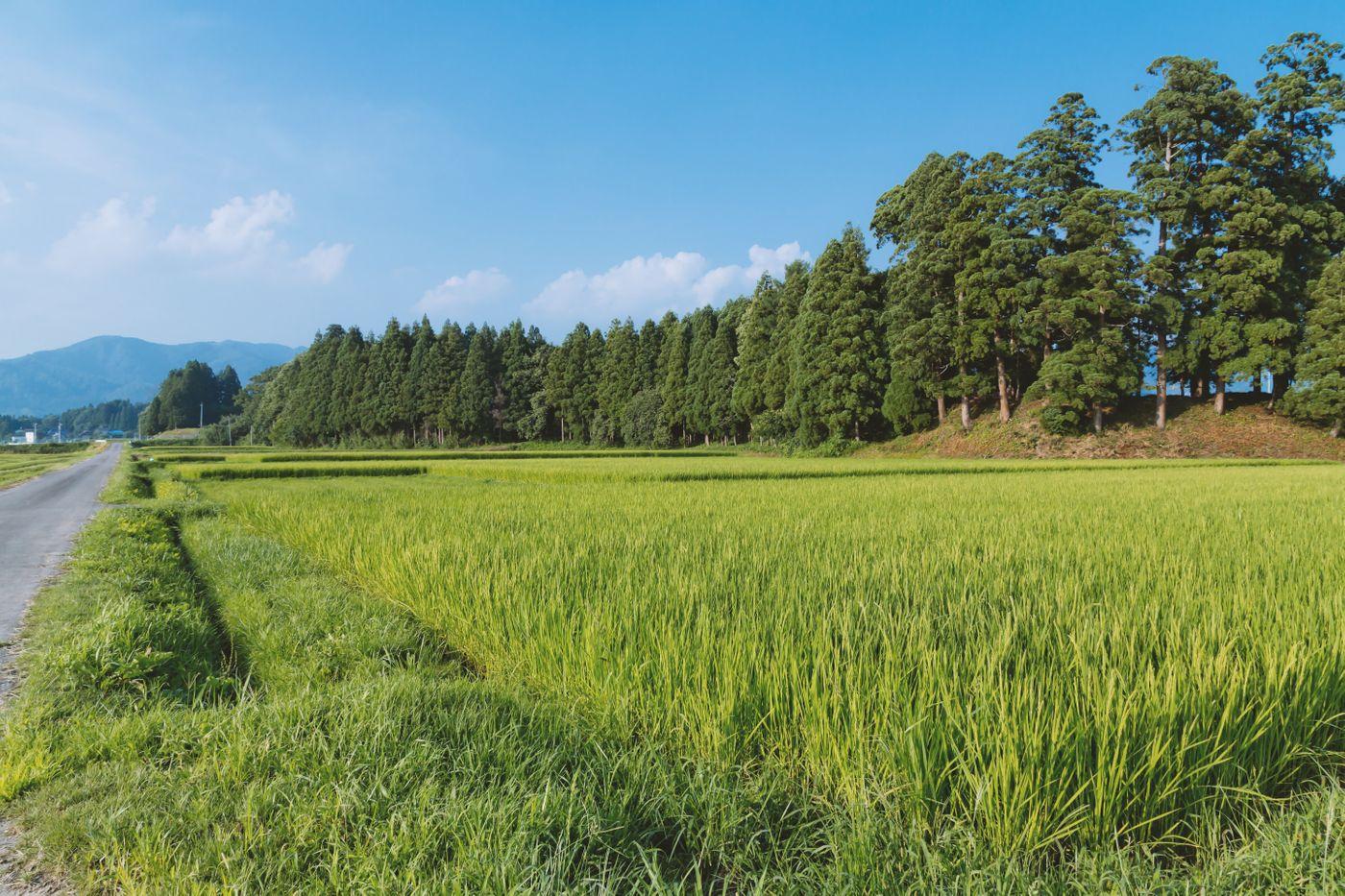 田舎の田畑の写真