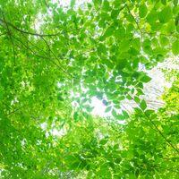 夏の木漏れ日の写真