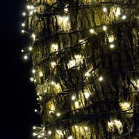 木に巻きつく電飾の写真