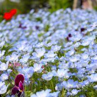 青い花の花壇の写真