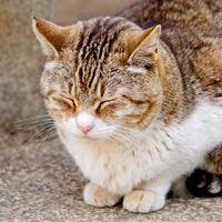 うたたねをする猫の写真