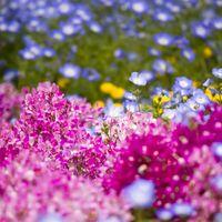 山下公園の花壇の写真
