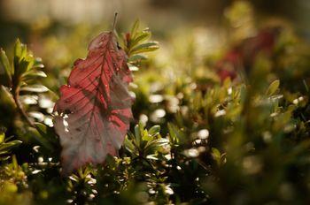 街路樹に泊った枯れ葉の写真