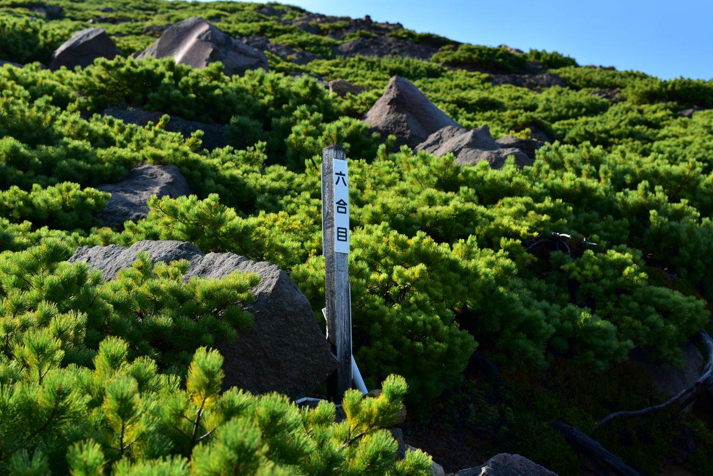 雌阿寒岳の六合目(北海道釧路市)の写真