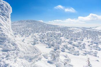 西吾妻山神社方面から見る辺り一面の樹氷原の写真