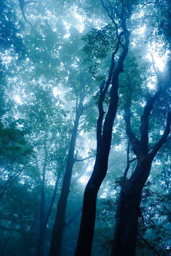 霧に照らされる若葉の写真