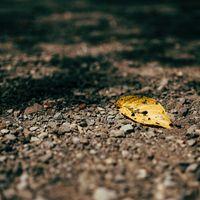 秋の始まりを告げる落ち葉の写真