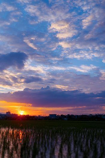 水田と露の空の写真