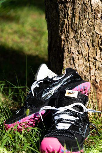 木の下に飾られたスニーカー(エアズームテラカイガー)の写真