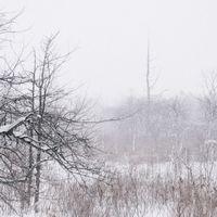 雪積もる針葉樹と白樺の写真