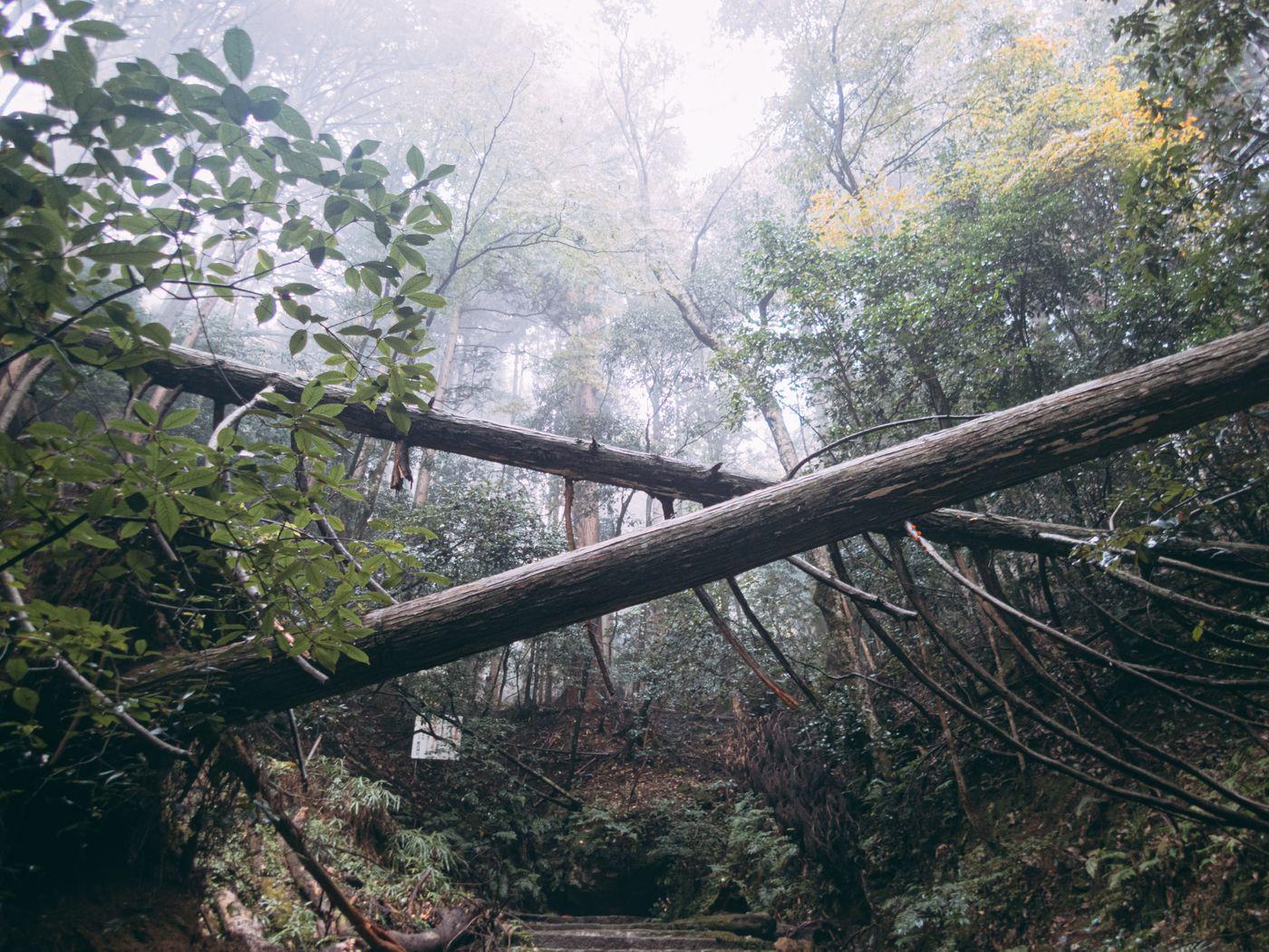 霧に包まれた森の中の倒木の写真