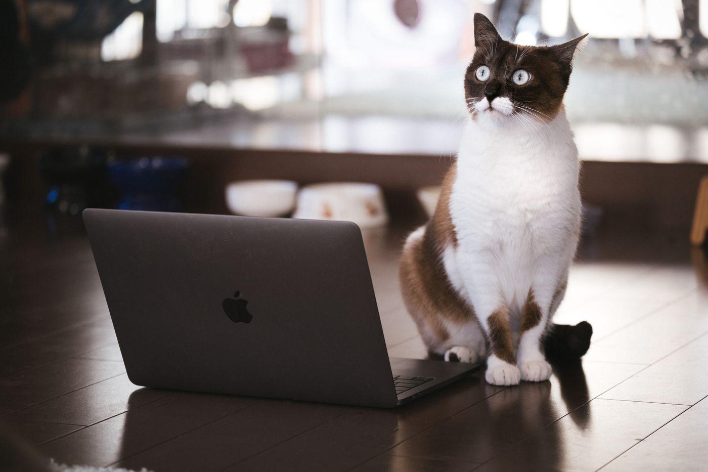 ノートパソコンを使ってプレゼンする猫の写真