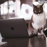 解読困難なコードに頭を悩ませる猫エンジニアの写真