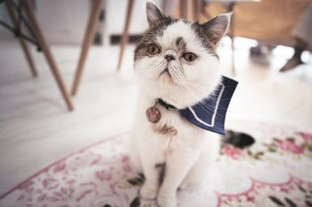 信じるか信じないかはあなた次第ですと告げられた猫の写真