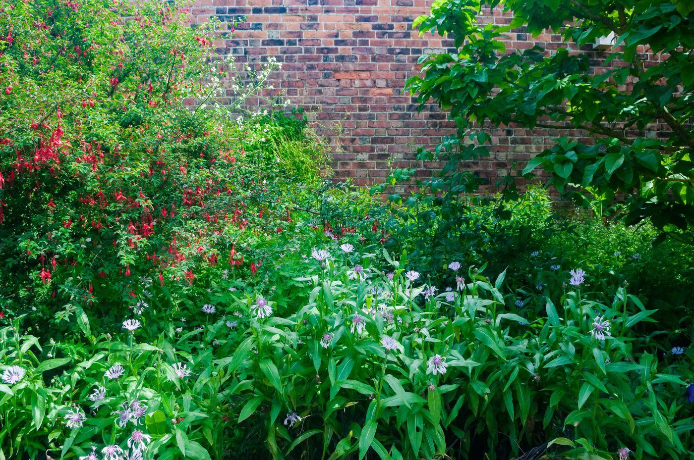 初夏の庭の写真