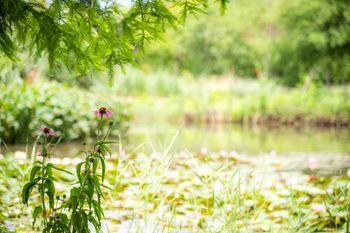 池端の草花の写真