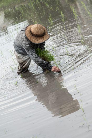 水田に映る田植え姿の写真