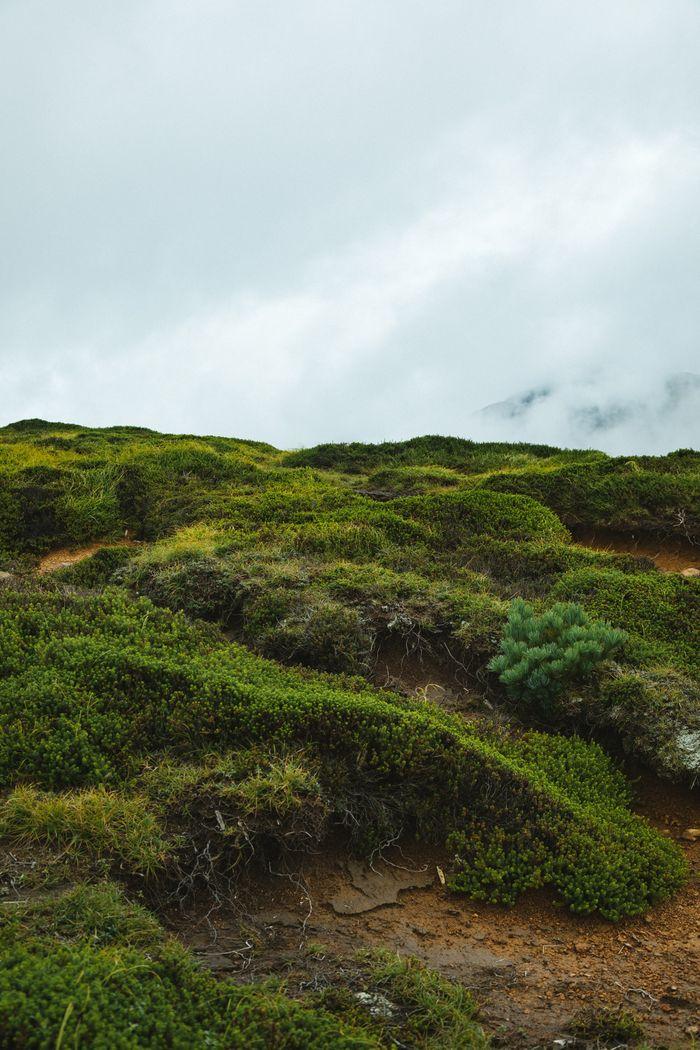 高山植物の写真