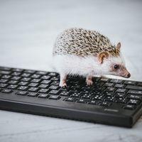 データ入力中のハリネズミ部長の写真