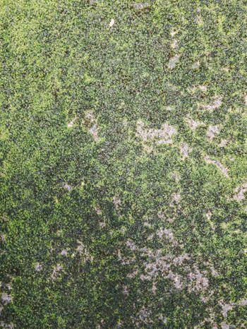 苔まみれの地面(テクスチャ)の写真