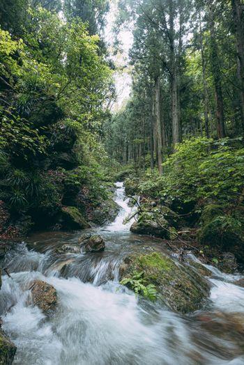 森に囲まれ勢いよく流れる渓流の写真