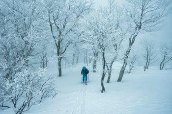 雪山のシュプールをなぞる登山者の写真