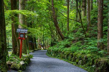 奥宮から本宮に向かう参道(京都)の写真